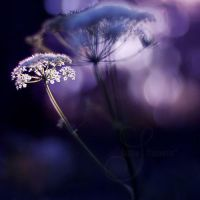 purple summer by prismes