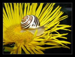 Snail... by Tetty
