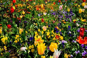 Flower Bed by DuffyGraham