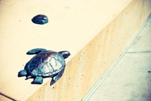 Bench Turtle by rclee21