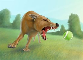 Dog Chasing Ball by silvercrossfox