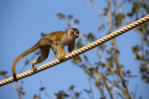 Even monkeys fall from trees by NikaTuwaPhotography