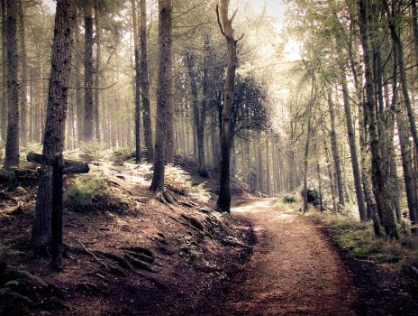 STOCK: Path through a spooky/ indie style forest by needanewname