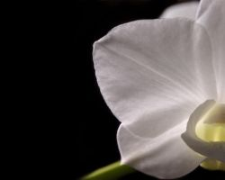 My Orchid by ChantalduPlessis