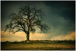 The Tree Of Life by kkart