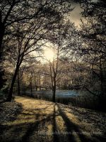 Let the sunshine in by eschlehahn