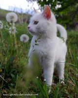 in the dandelions by Mari-Ghostly