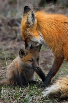 Proud Father by Nate-Zeman