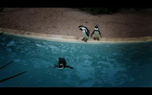 Pinguins by Shredex