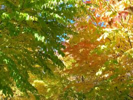 Fall Colors 4 by Pessimistic-Optimist