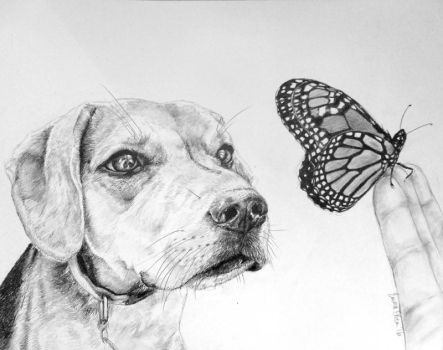 Sniffing a Butterfly by avaunt