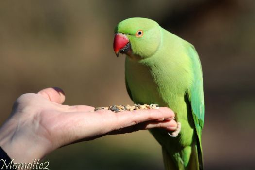 Sharing a moment with a sweet green friend by Momotte2