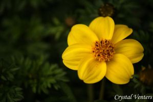 Yellow One by poetcrystaldawn