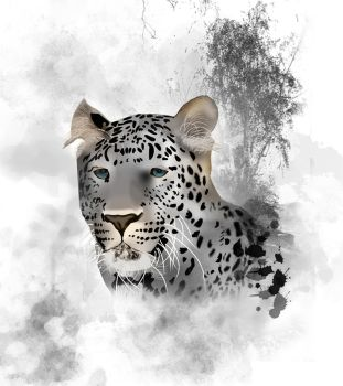 Leopard by Ernest62