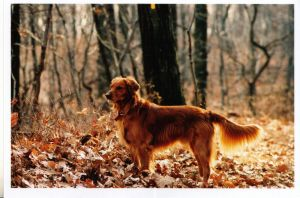 dog by wphotographer44
