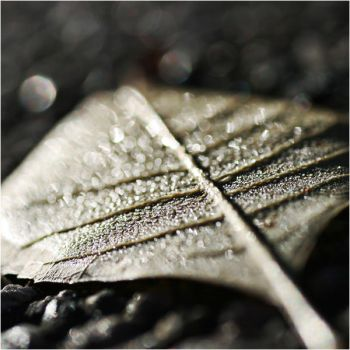 Square Edition: Bokeh Leaf by Mimado