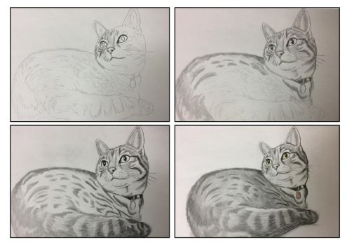 Finchley The Cat Process by UrbanGerbils
