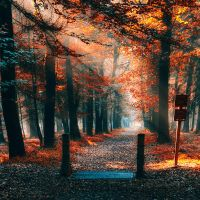 Ordinary woods by Oer-Wout